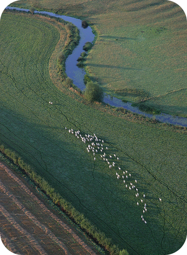 Sheep herds are like protons and electrons