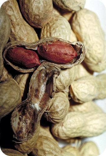 The shell of a peanut is like the ionic radii of an atom