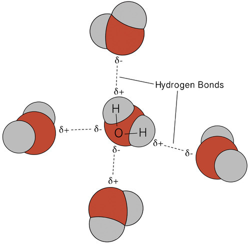 multiple hydrogen bond between water molecules
