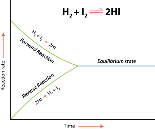 At equilibrium, the rate of the forward reaction equals the rate of the reverse reaction