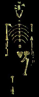 Lucy fossil