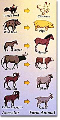 Ancestors of Farm Animals