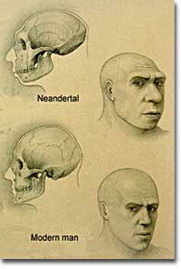 Neanderthal morphology