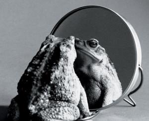 Frog looking into mirror