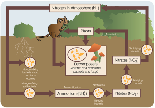 the carbon cycle and the nitrogen cycle earth science nitrogen cycle equation the nitrogen cycle