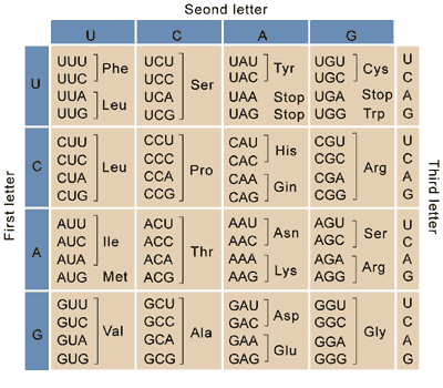 Table 1. Universal Genetic Code
