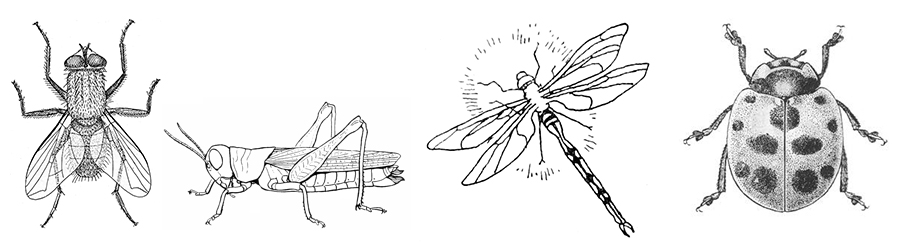 Illustrations of a housefly, a grasshopper, a dragonfly, and a ladybug.