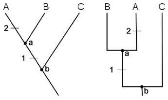 2 cladograms
