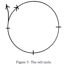 Figure 7: The Cell Cycle. A blank circle with an arrow around the perimeter, indicating clockwise movement