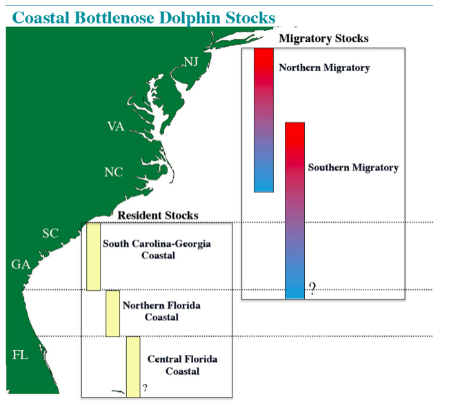 Chart showing Coastal Bottlenose Dolphin Stocks. South Carolina-Georgia Coastal and Central Florida Coastal have a large stock, with Northern Florida Coastal having a slightly smaller stock. There are more Southern Migratory dolphins than Northern Migratory.