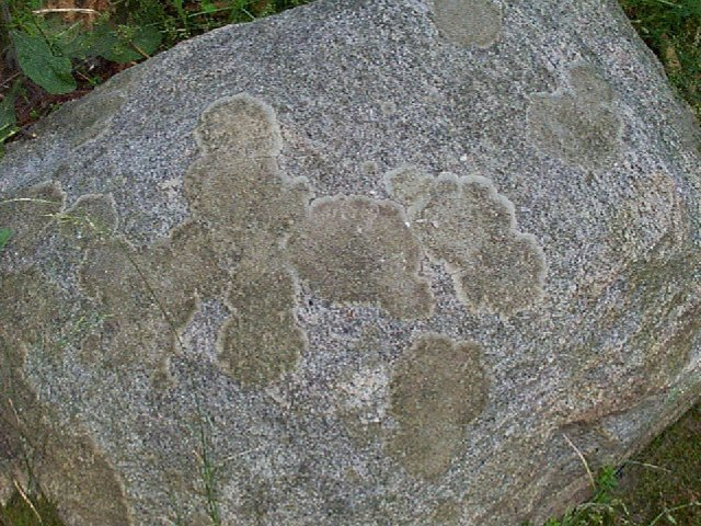 Figure 19. Lichens growing on a rock