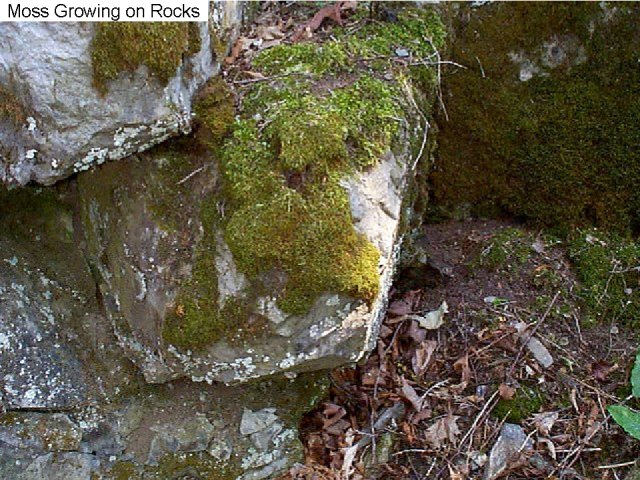 Figure 1. Moss growing on a rock.