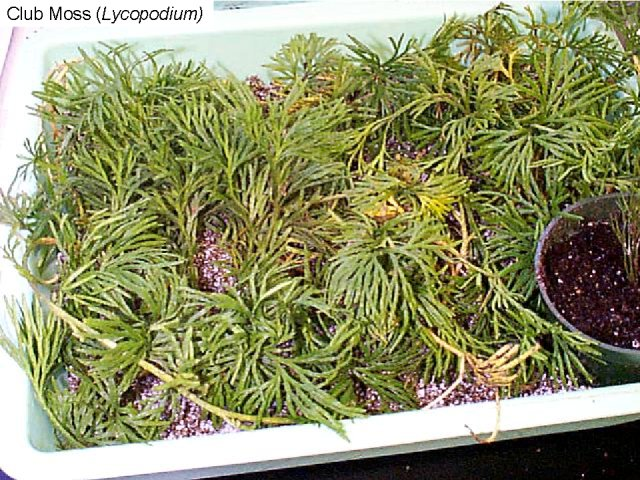 Reading Seedless Plants Biology Ii Laboratory Manual