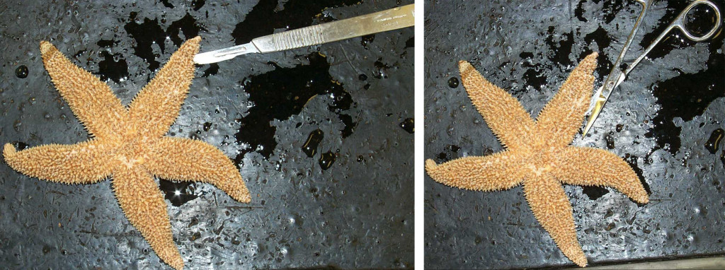 starfishcuts