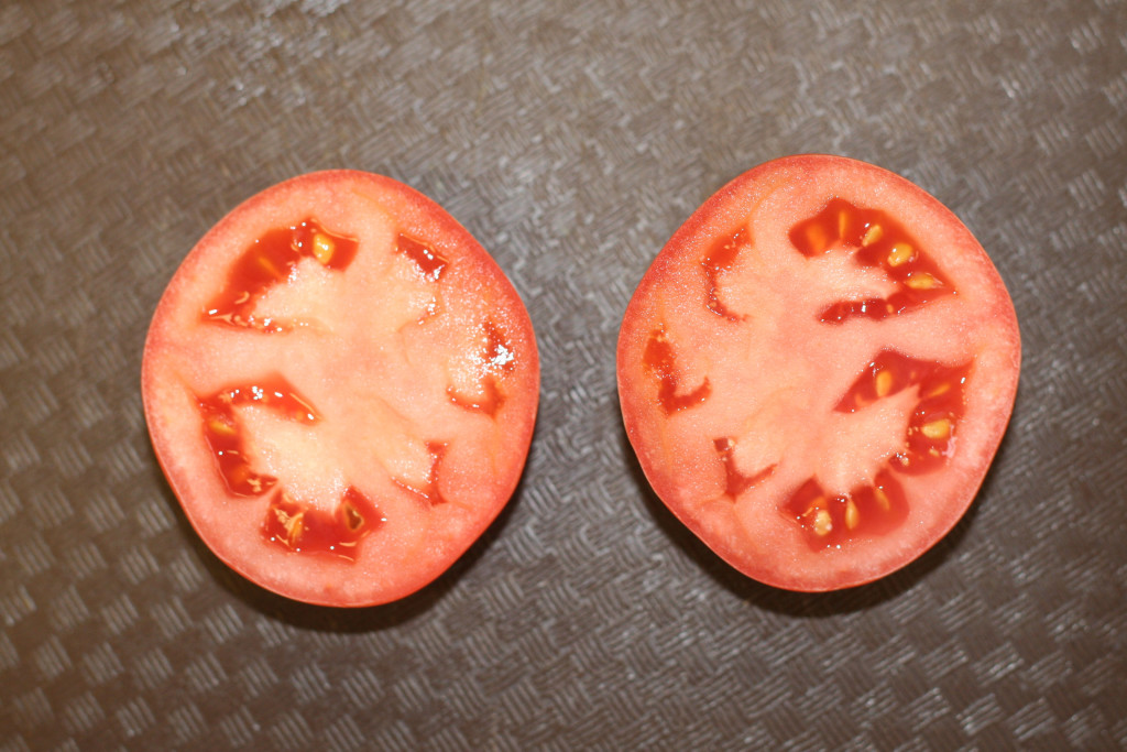 Tomato showing fused carpels