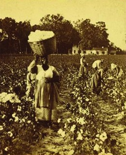 The Economics of Cotton | US History I (OS Collection)