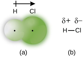 """Two diagrams are shown and labeled """"a"""" and """"b."""" Diagram a shows a small sphere labeled, """"H"""" and a larger sphere labeled, """"C l"""" that overlap slightly. Both spheres have a small dot in the center. Diagram b shows an H bonded to a C l with a single bond. A dipole and a positive sign are written above the H and a dipole and negative sign are written above the C l. An arrow points toward the C l with a plus sign on the end furthest from the arrow's head near the H."""
