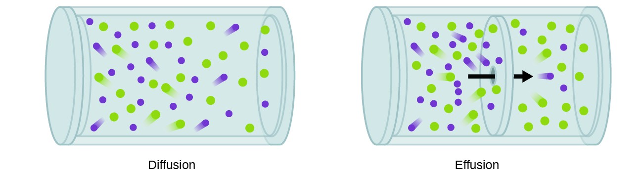 """This figure contains two cylindrical containers which are oriented horizontally. The first is labeled """"Diffusion."""" In this container, approximately 25 purple and 25 green circles are shown, evenly distributed throughout the container. """"Trails"""" behind some of the circles indicate motion. In the second container, which is labeled """"Effusion,"""" a boundary layer is evident across the center of the cylindrical container, dividing the cylinder into two halves. A black arrow is drawn pointing through this boundary from left to right. To the left of the boundary, approximately 16 green circles and 20 purple circles are shown again with motion indicated by """"trails"""" behind some of the circles. To the right of the boundary, only 4 purple and 16 green circles are shown."""