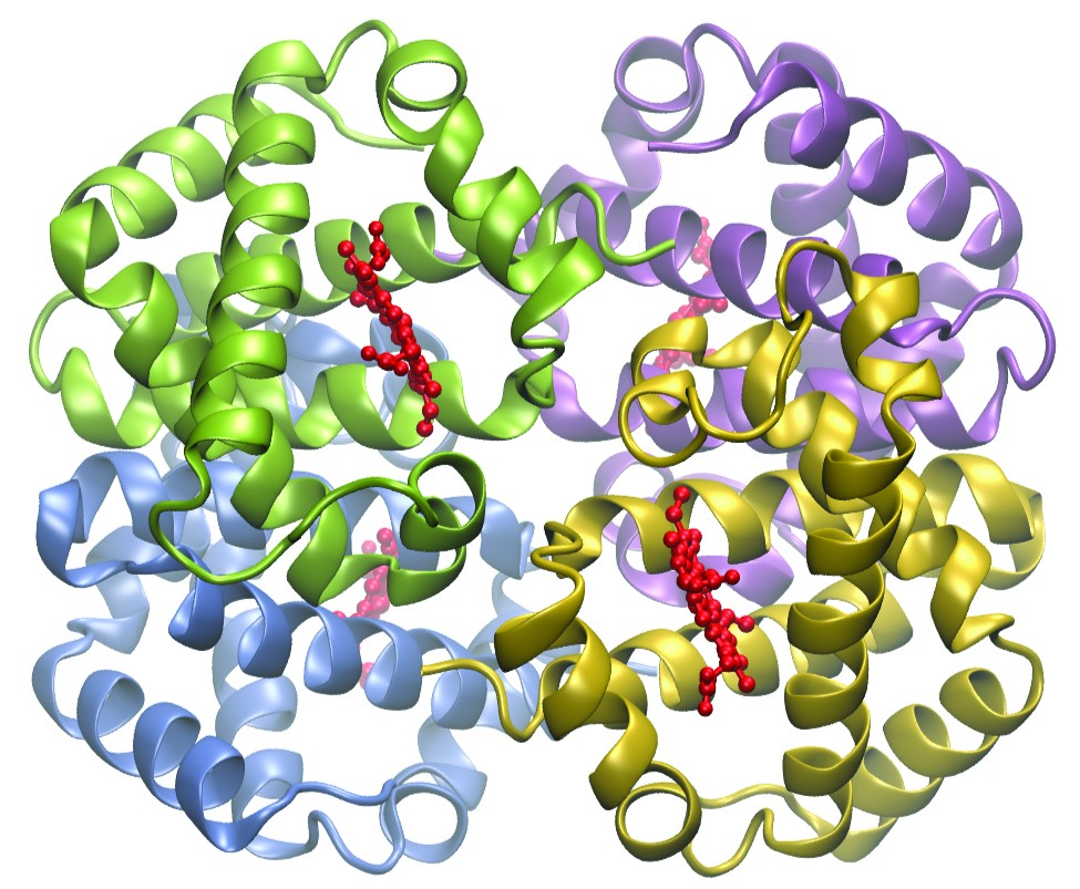 A colorful model of a hemoglobin structure is shown. The molecule has four distinct quadrants that are filled with spiral, ribbon-like regions. The upper right quadrant is lavender, lower right is gold, lower left is light blue, and upper left is green. In each of these regions, clusters of approximately 25 red dots in nearly linear arrangements are present near the center.