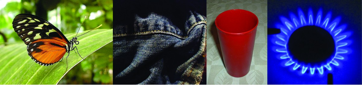 This figure includes four photographs. The first is of an orange and black butterfly on a large leaf. The second shows a seam on a worn pair of blue jeans. The third image is of a red plastic drinking cup. The last image shows the blue flames of a lit burner on a gas stove.