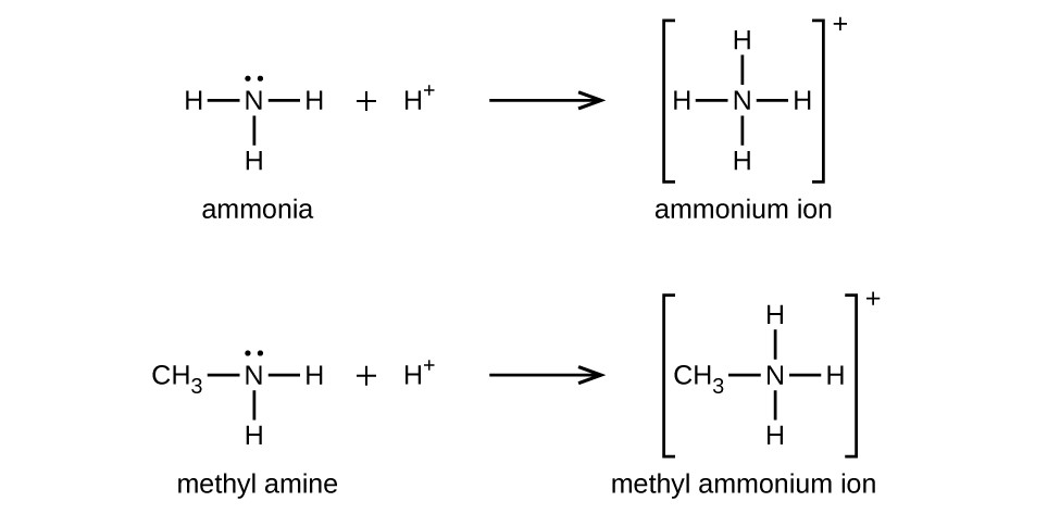 Amines And Amides Chemistry For Majors