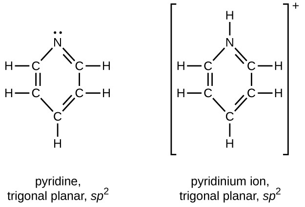 Two structures are shown, one for pyridine, which is trigonal planar and is labeled s p superscript 2. The second is for the pyridium ion, which is also trigonal planar and is labeled s p superscript 2. Both structures include a hexagonal ring composed of 5 C atoms and 1 N atom which is shown at the top of each structure. In both rings, double bonds alternate and single H atoms extend outward from each C atom. The only structural difference between the two structures involves the unshared electron pair on the N atom in pyridine. This is replaced by a bonded H atom in the pyridium ion which is represented in brackets with a superscript plus symbol outside the brackets.
