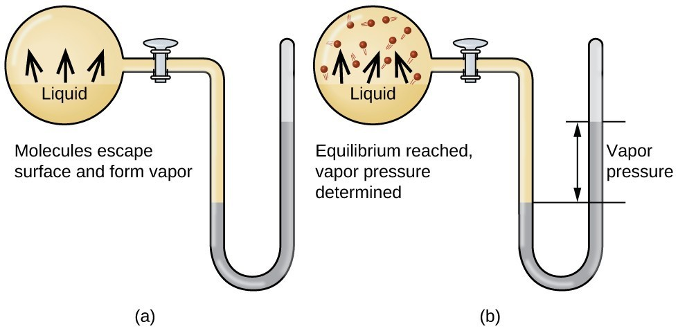 """Three images are shown and labeled """"a,"""" """"b,"""" and """"c."""" Each image shows a round bulb connected on the right to a tube that is horizontal, then is bent vertically, curves, and then is vertical again to make a u-shape. A valve is located in the horizontal portion of the tube. Image a depicts a liquid in the bulb, labeled, """"Liquid,"""" and upward-facing arrows leading away from the surface of the liquid. The phrase, """"Molecules escape surface and form vapor"""" is written below the bulb, and a gray liquid in the u-shaped portion of the tube is shown higher on the right side. Image b depicts a liquid in the bulb, labeled, """"Liquid,"""" and upward-facing arrows leading away from the surface of the liquid to molecules drawn in the upper portion of the bulb. Image c depicts a liquid in the bulb, labeled, """"Liquid,"""" and upward-facing arrows leading away from the surface of the liquid to molecules drawn in the upper portion of the bulb. There are more molecules present in c than in b. The phrase """"Equilibrium reached, vapor pressure determined,"""" is written below the bulb and a gray liquid in the u-shaped portion of the tube is shown higher on the right side. A horizontal line is drawn level with each of these liquid levels and the distance between the lines is labeled with a double-headed arrow. This section is labeled with the phrase, """"Vapor pressure."""""""
