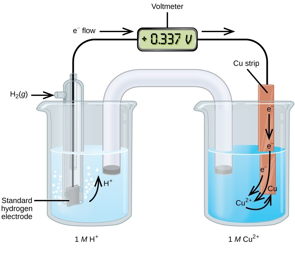"This figure contains a diagram of an electrochemical cell. Two beakers are shown. Each is just over half full. The beaker on the left contains a clear, colorless solution and is labeled below as ""1 M H superscript plus."" The beaker on the right contains a blue solution and is labeled below as ""1 M C u superscript 2 plus."" A glass tube in the shape of an inverted U connects the two beakers at the center of the diagram. The tube contents are colorless. The ends of the tubes are beneath the surface of the solutions in the beakers and a small grey plug is present at each end of the tube. The beaker on the left has a glass tube partially submersed in the liquid. Bubbles are rising from the grey square, labeled ""Standard hydrogen electrode"" at the bottom of the tube. A curved arrow points up to the right, indicating the direction of the bubbles. A black wire extends from the grey square up the interior of the tube through a small port at the top to a rectangle with a digital readout of ""positive 0.337 V"" which is labeled ""Voltmeter."" A second small port extends out the top of the tube to the left. An arrow points to the port opening from the left. The base of this arrow is labeled ""H subscript 2 ( g )."" The beaker on the right has an orange-brown strip that is labeled ""C u strip"" at the top. A wire extends from the top of this strip to the voltmeter. An arrow points toward the voltmeter from the left which is labeled ""e superscript negative flow."" Similarly, an arrow points away from the voltmeter to the right. A curved arrow extends from the standard hydrogen electrode in the beaker on the left into the surrounding solution. The tip of this arrow is labeled ""H plus."" An arrow points downward from the label ""e superscript negative"" on the C u strip in the beaker on the right. A second curved arrow extends from another ""e superscript negative"" label into the solution below toward the label ""C u superscript 2 plus"" in the solution. A third ""e superscript negative"" label positioned at the lower left edge of the C u strip has a curved arrow extending from it to the ""C u superscript 2 plus"" label in the solution. A curved arrow extends from this ""C u superscript 2 plus"" label to a ""C u"" label at the lower edge of the C u strip."