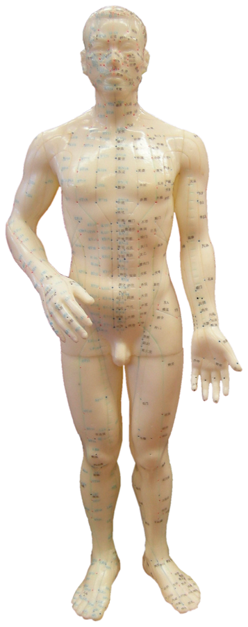 3D nude male figure with all the acupoints indicated.