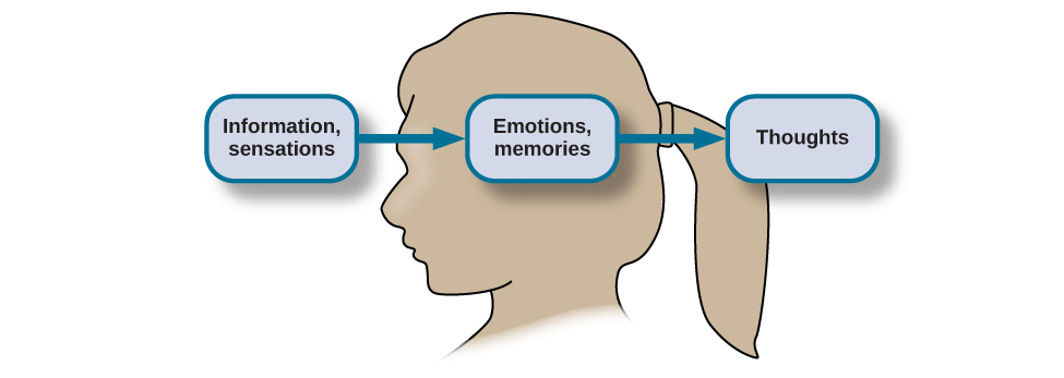 "The outline of a human head is shown. There is a box containing ""Information, sensations"" in front of the head. An arrow from this box points to another box containing ""Emotions, memories"" located where the person's brain would be. An arrow from this second box points to a third box containing ""Thoughts"" behind the head."