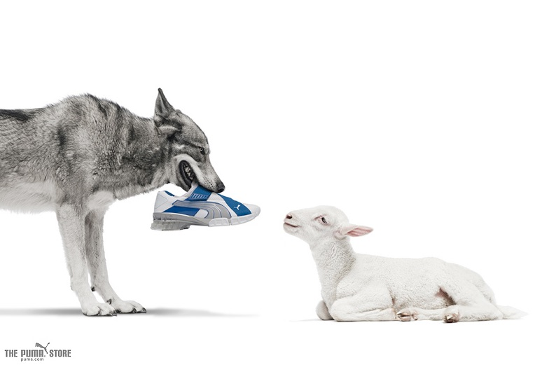 A wolf and a lamb look at each other. The lamb is laying down and the wolf is standing. The wolf has a Puma sneaker in its mouth.