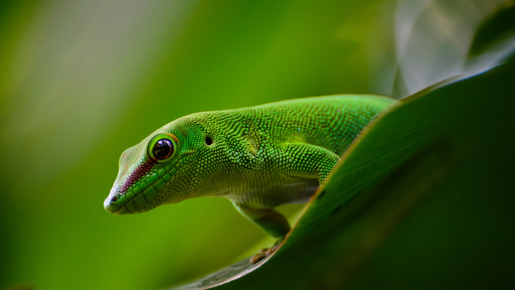 Close-up view of a gecko.