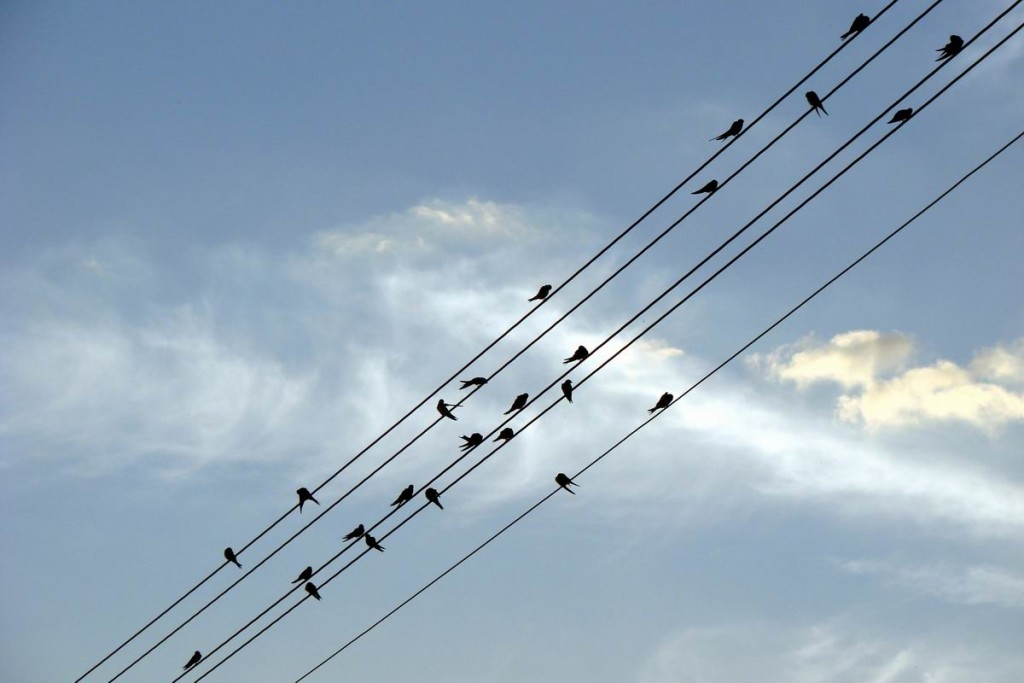 Birds on five parallel telephone wires, resembling staves
