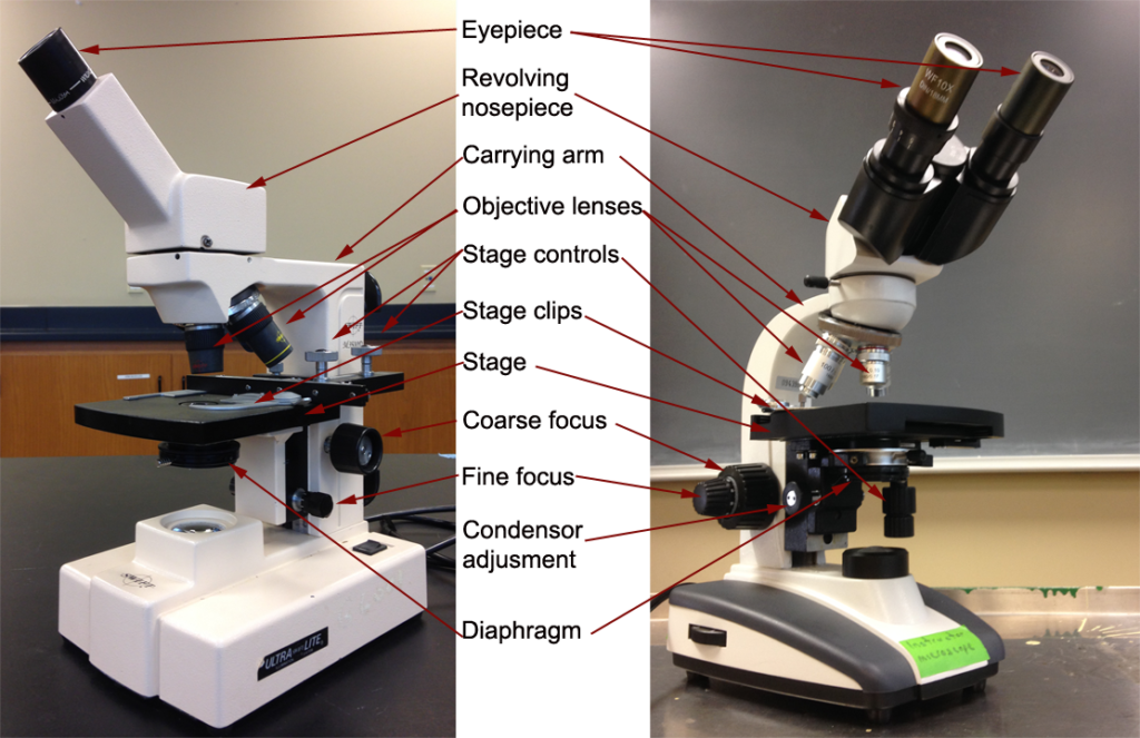 The Parts Of A Compound Microscope And How To Handle Them Correctly