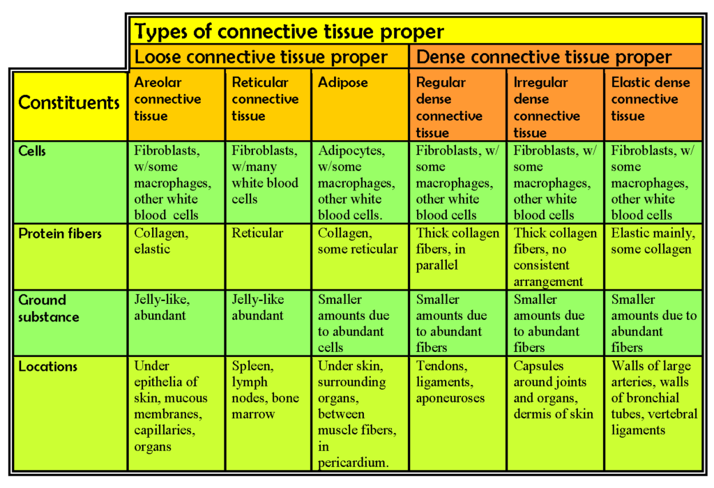 141-oer-lab-5-microscope-2-_-fig-5-8-tissue-table