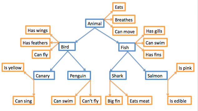 Concept map of words. Animal nouns are in blue, with descriptors in orange, connected by lines and arrows. Animal (eats; breathes; can move); Fish (has gills; can swim; has fins); Shark (big fin, eats meat); Salmon (is pink, is edible). Connecting from Animal on the left: Bird (has wings; has feathers; can fly); Canary (is yellow, can sing); Penguin (can swim, can't fly).