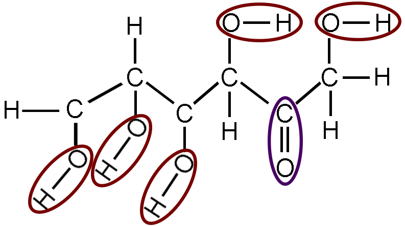 The same diagram of fructose as above. Each oxygen bound to a hydrogen has been circled in red. These are the hydroxyl groups. The carbon double bound to an oxygen atom has been circled in purple. This is a carbonyl group.