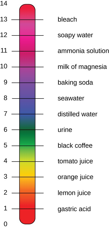 A pH scale is numbered from 0 to 14, with examples of liquids for numbers 1 through 13: 1 is gastric acid, 2 is lemon juice, 3 is orange juice, 4 is tomato juice, 5 is black coffee, 6 is urine, 7 is distilled water, 8 is seawater, 9 is baking soda, 10 is milk of magnesia, 11 is ammonia solution, 12 is soapy water, and 13 is bleach.