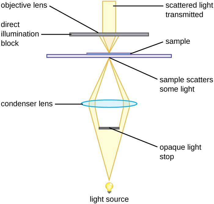Instruments of microscopy microbiology a diagram showing the light path in a darkfield microscope light travels from the light ccuart Images