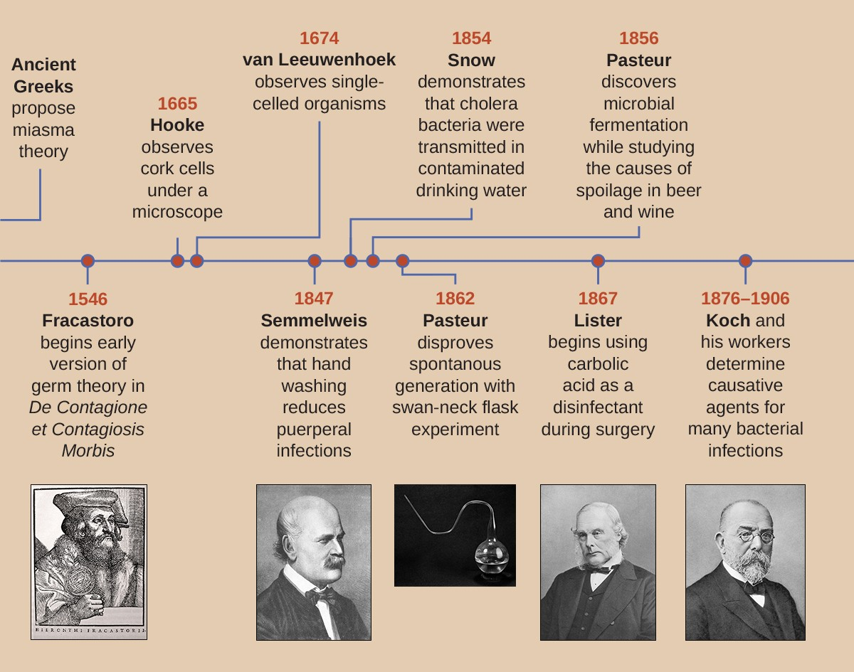A timeline. To the far left are the ancient Greeks who proposed the Miasma Theory. In 1546 Fracastoro begins early version of Germ Theory in De Contagione et Contagiosis Morbis. In 1665 Hooke observes cork cells under a microscope. In 1674 van Leeuwenhoek observes single-celled organisms. In 1847 Semmelweis demonstrates that hand washing reduces puerperal infections. In 1854 Snow demonstrates that cholera bacteria were transmitted in contaminated drinking water. In 1856 Pasteur discovers microbial fermentation while studying the cause of spoilage in beer and wine. In 1862 Pasteur disproves spontaneous generation with swan-neck flask experiment. In 1867 Lister begins using carbolic acid as a disinfectant during surgery. From 1867 – 1906 Koch and his workers determine causative agents for many bacterial infections.