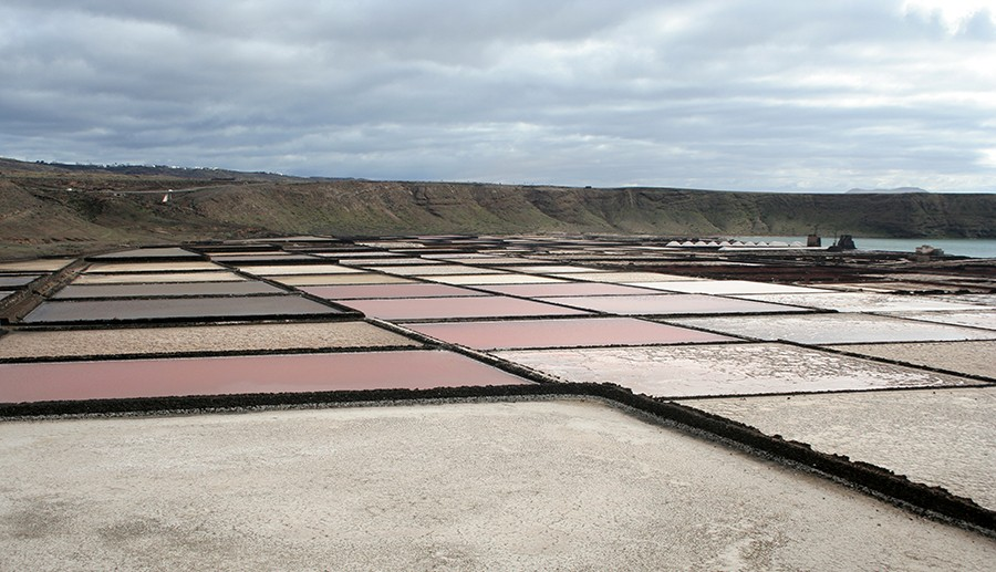 A photograph of red, white and pink fields.