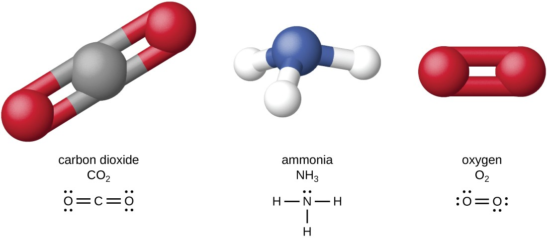 Carbon dioxide (CO2) has a carbon atom in the center. This carbon atom is double bonded to an oxygen on the left and another oxygen on the right. Ammonia NH3 has a nitrogen attached to 3 hydrogen atoms. Oxygen (O2) has two oxygen atoCarbon dioxide (CO2) has a carbon atom in the center. This carbon atom is double bonded to an oxygen on the left and another oxygen on the right. Ammonia NH3 has a nitrogen attached to 3 hydrogen atoms. Oxygen (O2) has two oxygen atoms double bonded to each other.ms double bonded to each other.