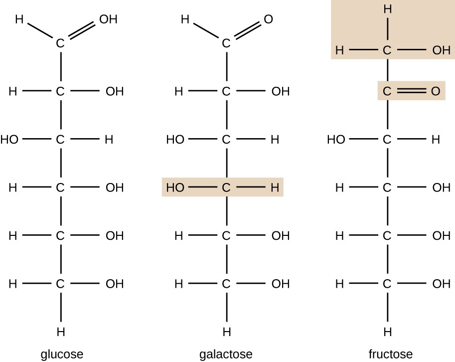 The chemical formula for galactose is 6 Cs in a chain. The top C has a double bonded O, the next C has an OH on the right, the next 2 Cs have OHs on the left, and the last 2 Cs have OHs on the right. The chemical formula for fructose also has 6 Cs in a chain. The top C has an OH on the right. The next C has a double bonded O to the right. The next C has an OH to the left. The last 3 Cs have OHs to the right. All other bonds on both of these molecules are to Hs.