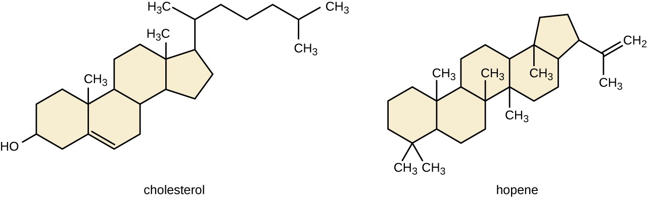 Lipids Microbiology