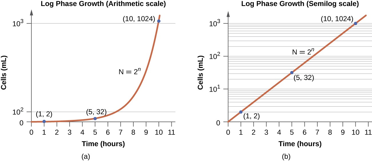 effects of penicillin and temperature on The β-lactam moiety (functional group) of penicillin binds to the enzyme  looking for a gram-positive antibiotic that effects protein synthesis.