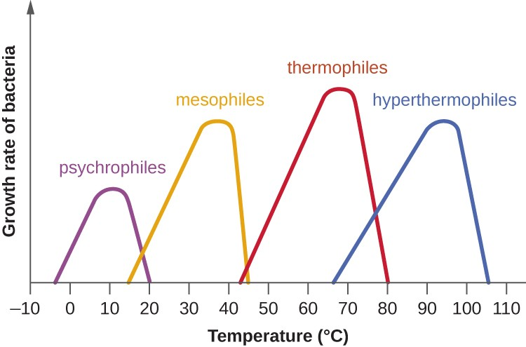 A graph with temperature (°C) on the X axis and growth rate of bacteria on the Y axis. The first bell curve is labeled psychrophile an peaks at 10°; it drops to 0 at -5 and 20°C. The next bell curve is labeled mesoophile an peaks at 35°; it drops to 0 at 15 and 45°C. The next bell curve is labeled thermophile an peaks at 65°; it drops to 0 at 45 and 80°C. The final bell curve is labeled hyperthermophile an peaks at 90°; it drops to 0 at 65 and 105°C.