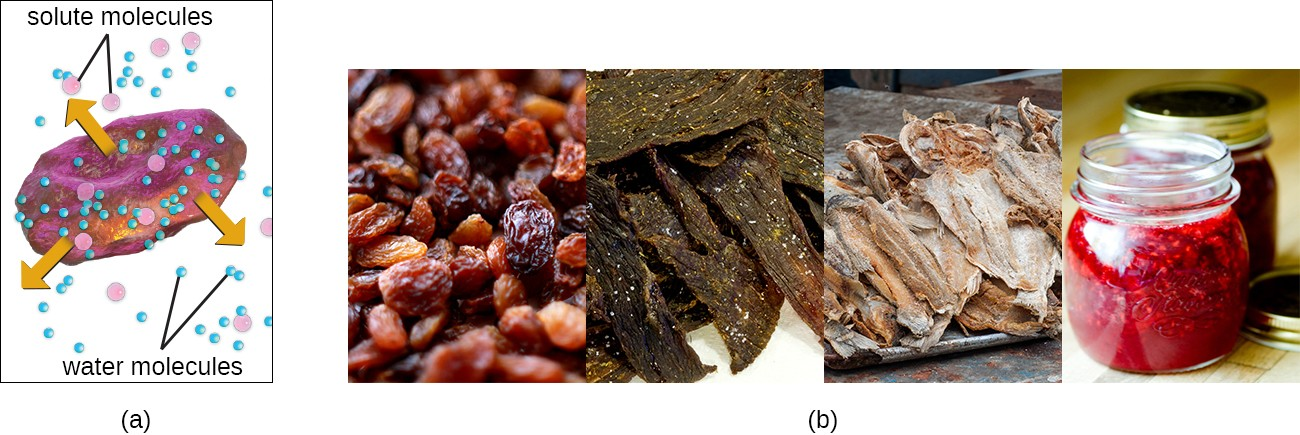 a) A drawing showing water leaving the cell and the cell shriveling. B) photos of raisins, beef jerky, salted fish, and jam.