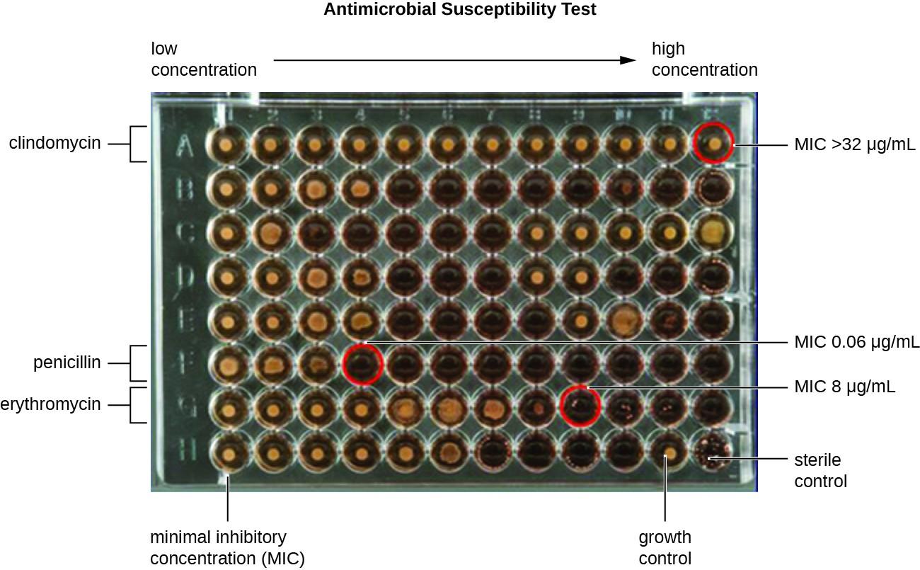 A 64 well plate; 8 rows and 12 columns. The concentration increases from left to fight. Each row has a different antibiotic. The MIC is determined by the lowest concentration with no growth as seen by a clear rather than dark look to the well. For clindamycin the MIC is above the highest concentration of 32 micrograms per mL. For Peniciliin the MIC is 0.06 and for Erythromycin it's 8 micrograms per mL. The bottom row shows positive and negative controls.