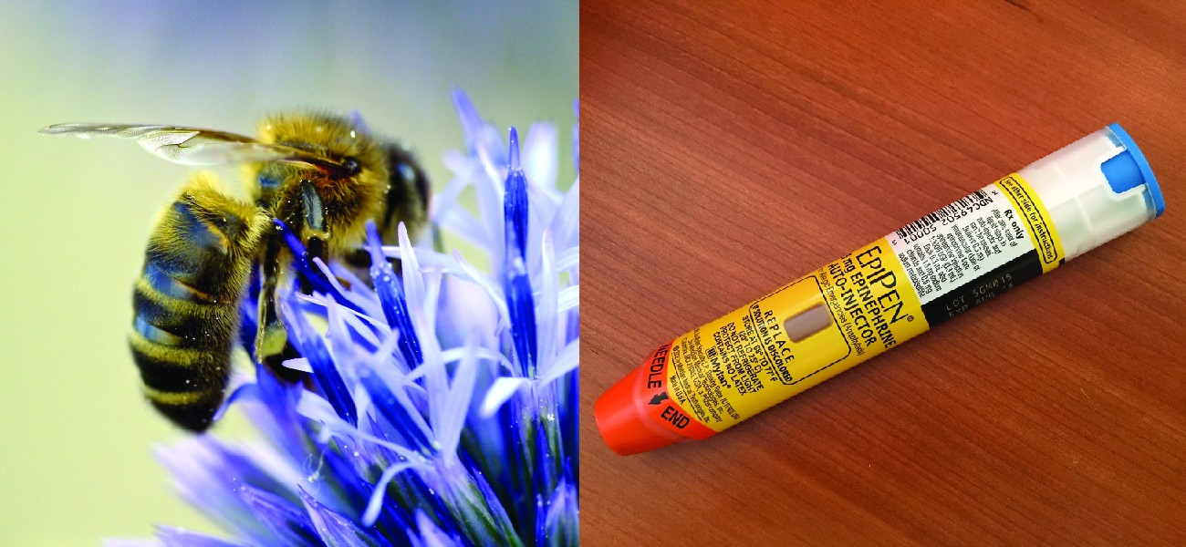 Photo of a bee on a flower. Photo of an EpiPen.