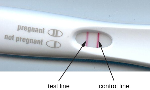 A pregnancy test stick with 2 red lines; one is labeled test line and the other is labeled control line. A key on the stick states that 2 lines means pregnant and 1 line means not pregnant